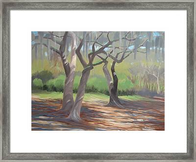Tree Dance Framed Print by Robert Rohrich