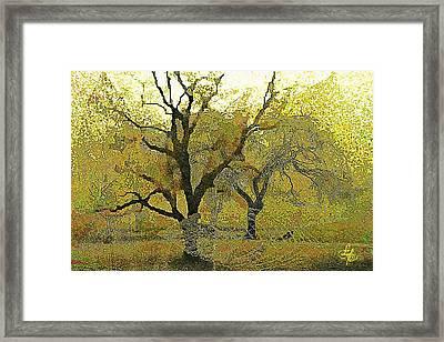 Tree Deconstructed 4 Framed Print by Lynda Payton