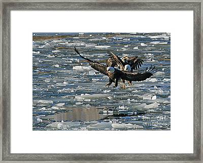 Tree Eagles On Ice Framed Print