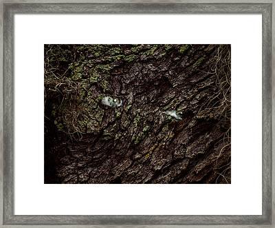 Tree Eyes Framed Print