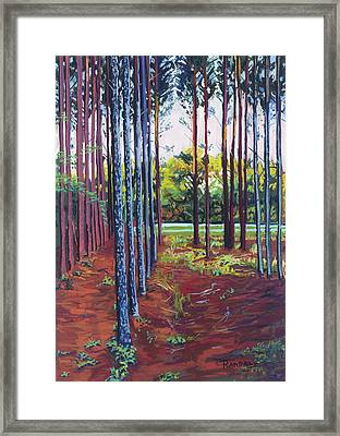 Tree Farm Framed Print
