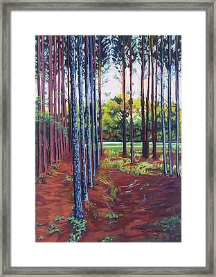 Tree Farm Framed Print by David Randall