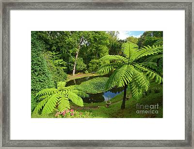 Tree Ferns Framed Print by Gaspar Avila