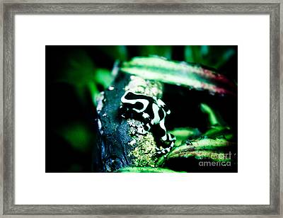 Tree Frog Framed Print by Brenton Woodruff