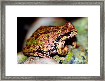 Tree Frog Close Up Framed Print