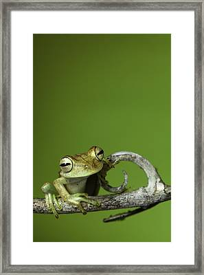 Tree Frog Framed Print