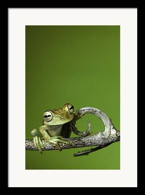 Rainforest Animal Framed Prints