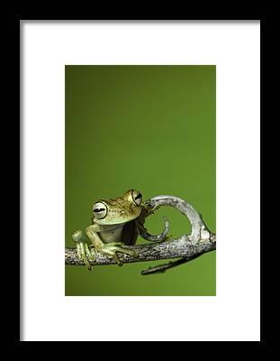 Rainforest Framed Prints