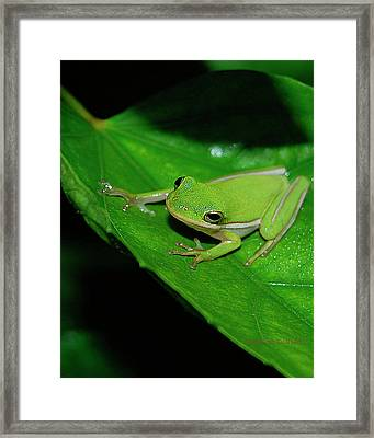 Tree Frog On Hibiscus Leaf Framed Print by DigiArt Diaries by Vicky B Fuller
