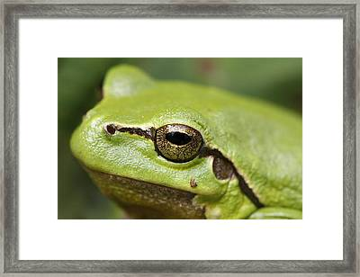 Tree Frog Portrait Framed Print by Roeselien Raimond