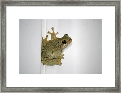 Spring Peeper Framed Print by Tammy Goad