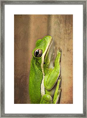 Tree Frog  Framed Print by Kay Brewer