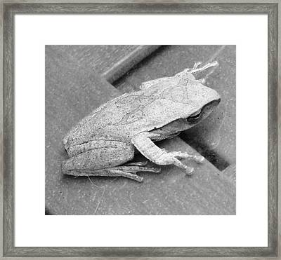 Tree Frog Up Late Framed Print by Kathy Daxon