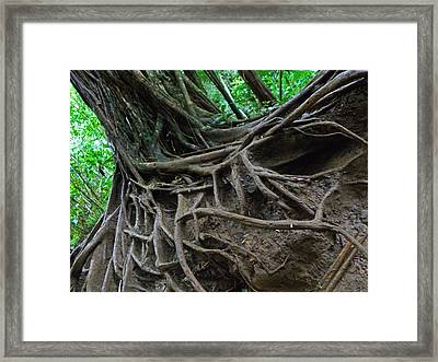 Tree From Manoa Falls Framed Print