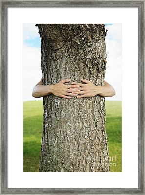 Tree Hugger 1 Framed Print by Brandon Tabiolo - Printscapes