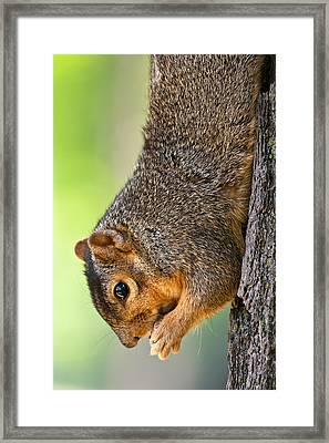 Tree Hugger Framed Print by James Marvin Phelps