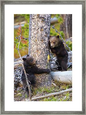 Tree Huggers Framed Print