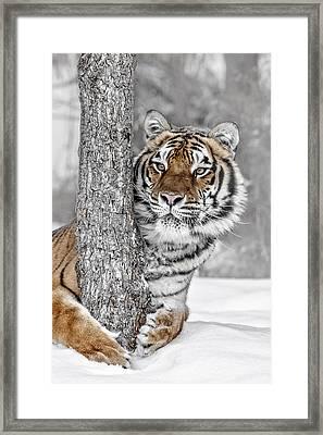 Tree Huggin Framed Print