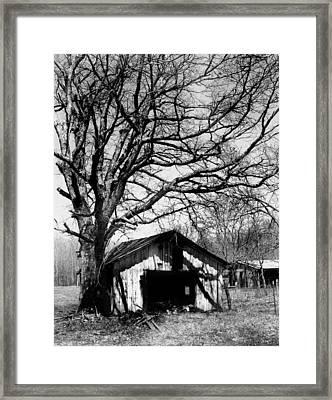 Tree-hut Framed Print by Curtis J Neeley Jr