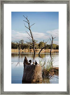 Framed Print featuring the photograph Tree Image by Douglas Barnard