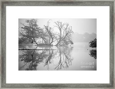 Tree In A Lake Framed Print by Pravine Chester