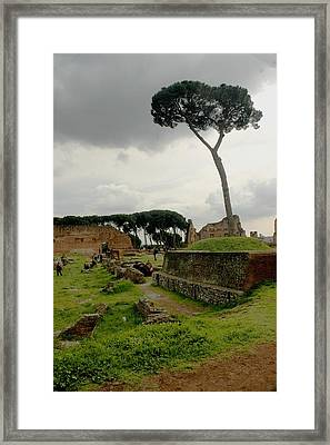 Tree In Ancient Rome Landscape Framed Print by Joseph Cossolini