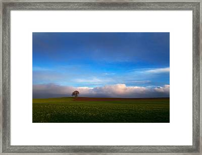 Tree In Arable Farmland Near Carlow Framed Print by Panoramic Images