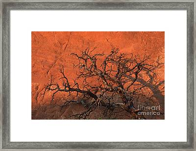 Tree In Arches Framed Print by Stan and Anne Foster