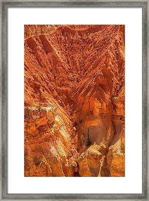 Tree In Bryce Framed Print