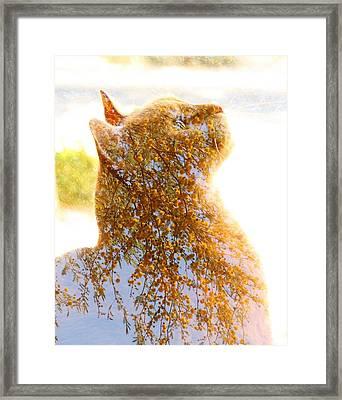Tree In Cat Framed Print