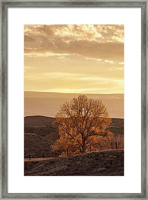 Tree In Desert At Sunset Framed Print