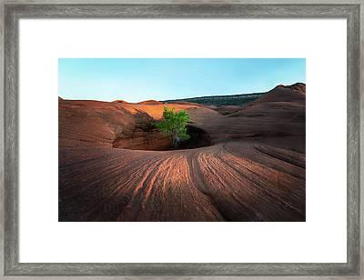 Tree In Desert Pothole Framed Print