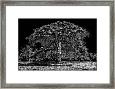 Tree In England Framed Print
