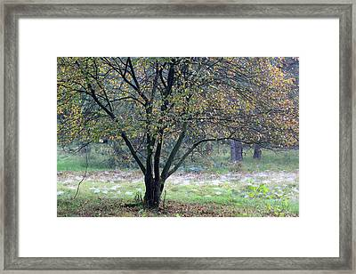 Tree In Forest With Autumn Colors Framed Print