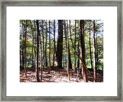 Tree In Front Of Lake 1 Framed Print by Lanjee Chee