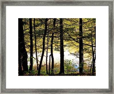 Tree In Front Of Lake 3 Framed Print by Lanjee Chee