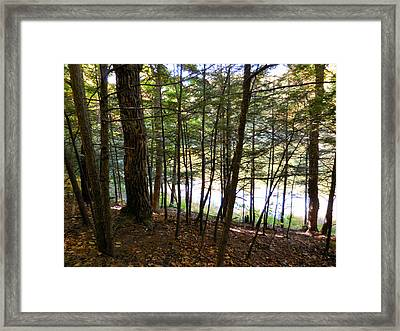 Tree In Front Of Lake 4 Framed Print by Lanjee Chee