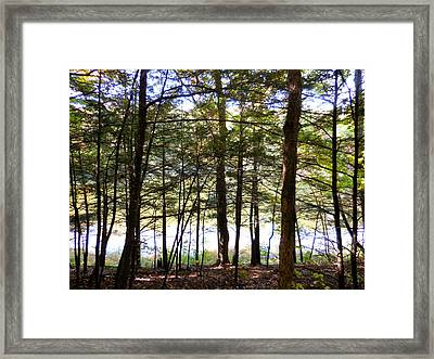 Tree In Front Of Lake 5 Framed Print by Lanjee Chee