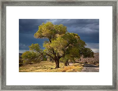 Tree In Nevada Framed Print by Gunter Nezhoda