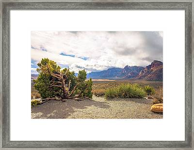 Tree In Red Rock Canyon Framed Print