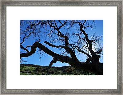 Tree In Rural Hills - Silhouette View Framed Print