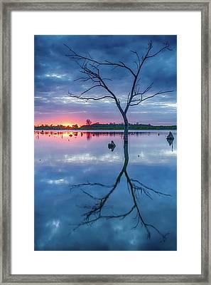 Tree In Silhouette Framed Print by Jae Mishra