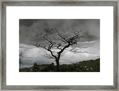 Tree In Silhouette Framed Print by Peter Hill