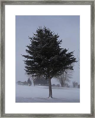 Tree In Snowstrom Framed Print by Susan Pedrini