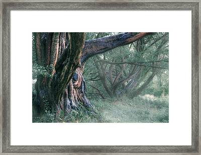 Tree In The Fog Framed Print by Joana Kruse