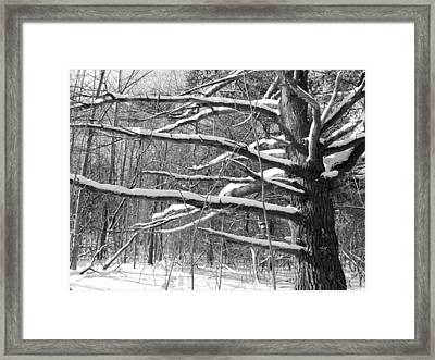 Tree In The Forest Framed Print by Douglas Pike