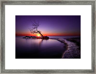 Tree In The Lake - Henderson, Ny. Lake Ontario Southwick Beach Sunset Sunrise Framed Print by Bradley P Smith