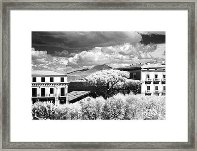 Tree In The Middle Framed Print