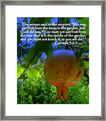 Tree In The Middle Of The Garden Framed Print