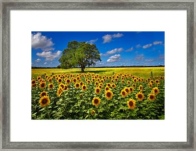 Tree In The Sunflower Field Framed Print